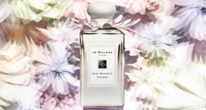 Star Magnolia Cologne