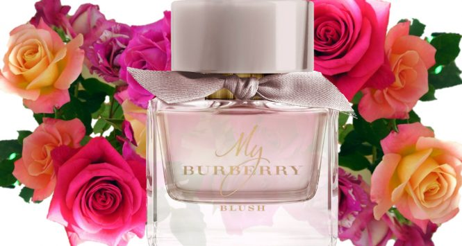 Burberry My Burberry Blush new perfume