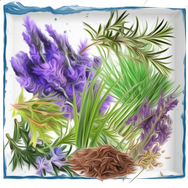 Aromatic olfactory perfume group fragrances